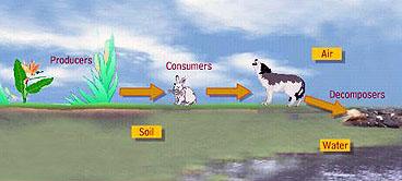 Faktor Biotik dan Faktor Abiotik Pada Prinsip Ekologi